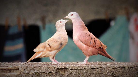 זוגיות: טיפים שיעשו לכם שלום בית אמיתי